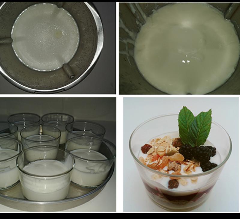 Yogures. Cómo hacer fermentaciones.