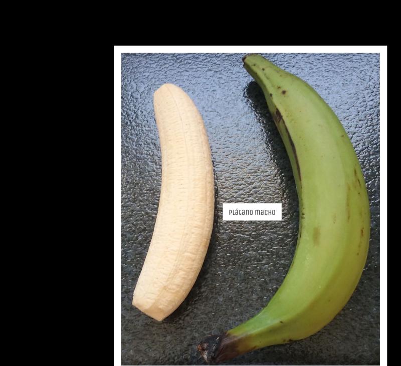 Descubre... el plátano macho