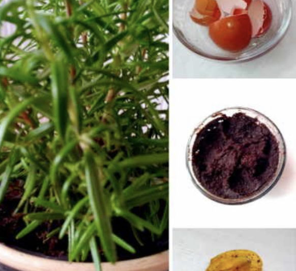 ABONO PARA PLANTAS BY Thermomix®