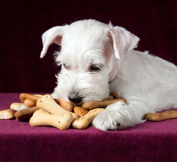 Galletas para perros con Thermomix®